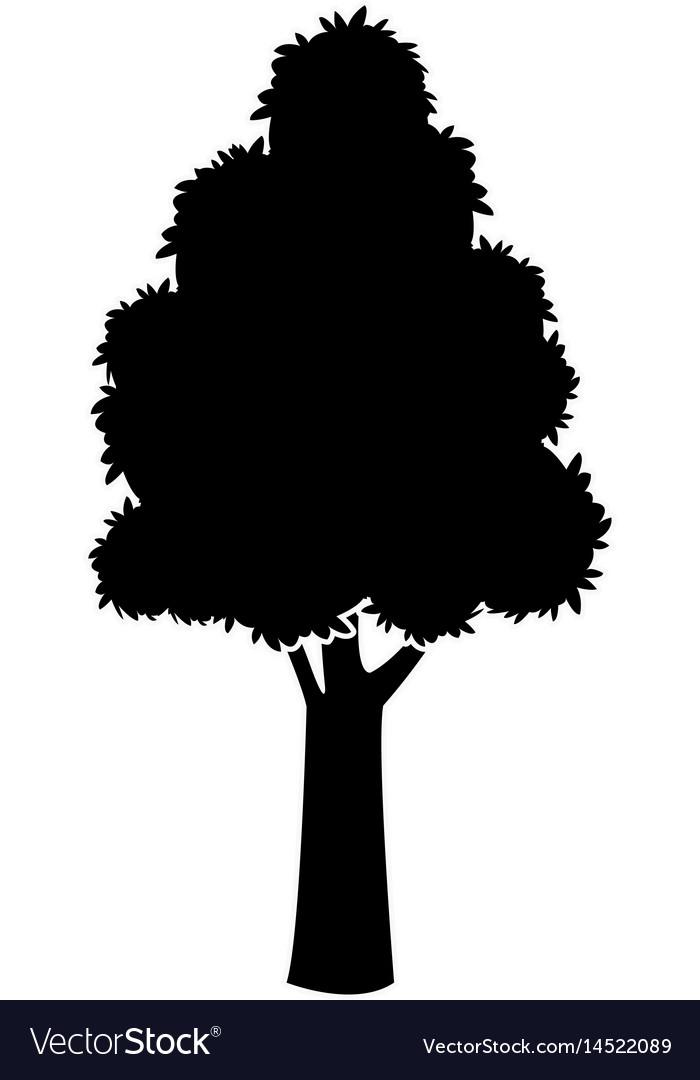 Black tree silhouette trunk stem high plant