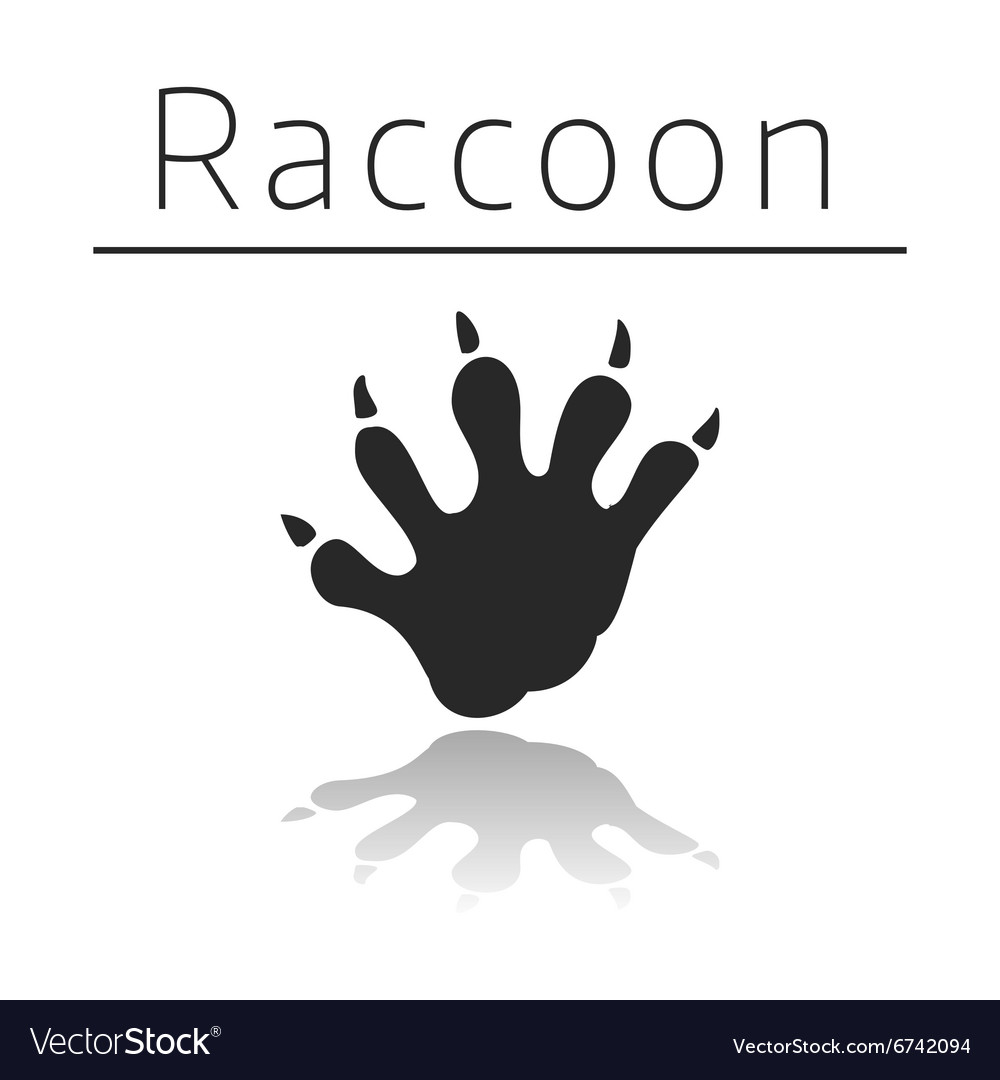 Raccoon animal track