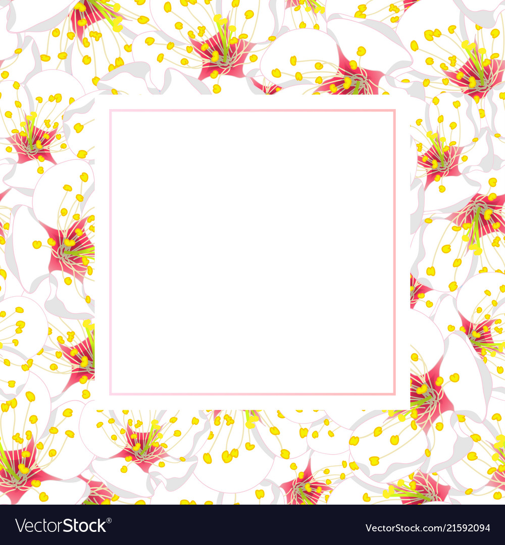White Plum Blossom Flower Banner Card Royalty Free Vector