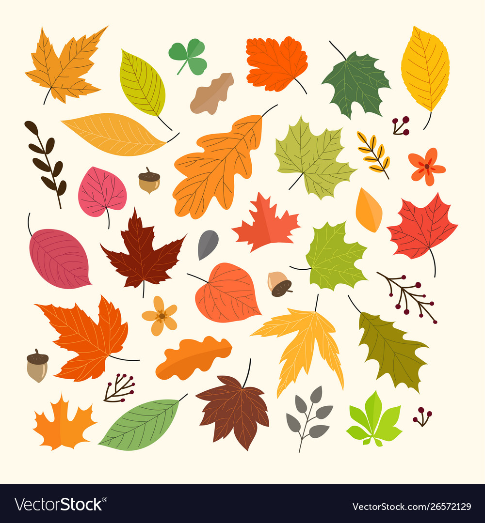 Different autumn leaves collection isolated on
