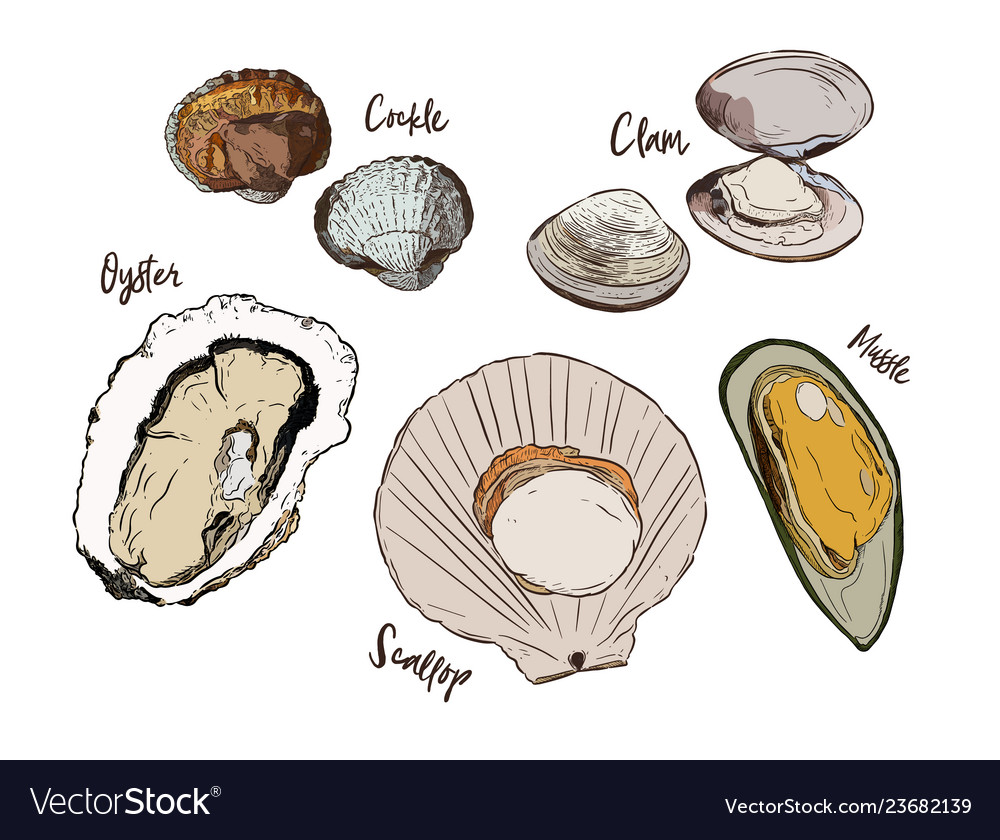 Shell hand draw sketch seafood set