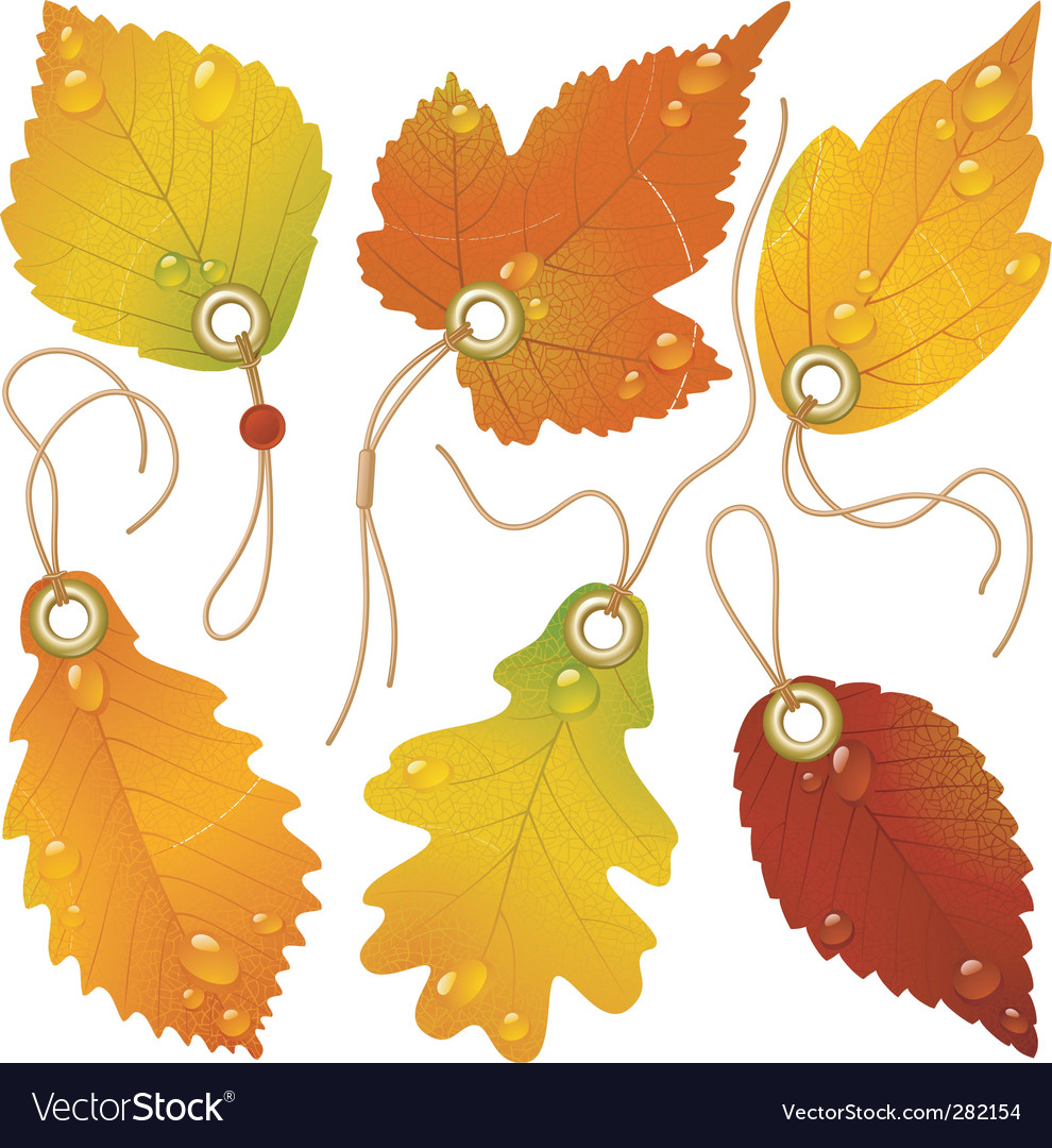 Autumnal discount vector image
