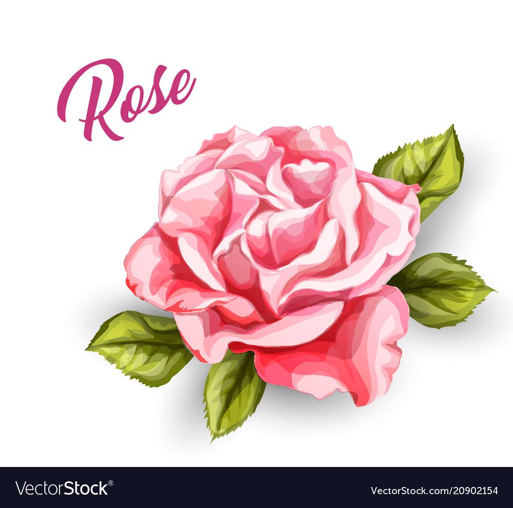 Watercolor rose flower wedding card