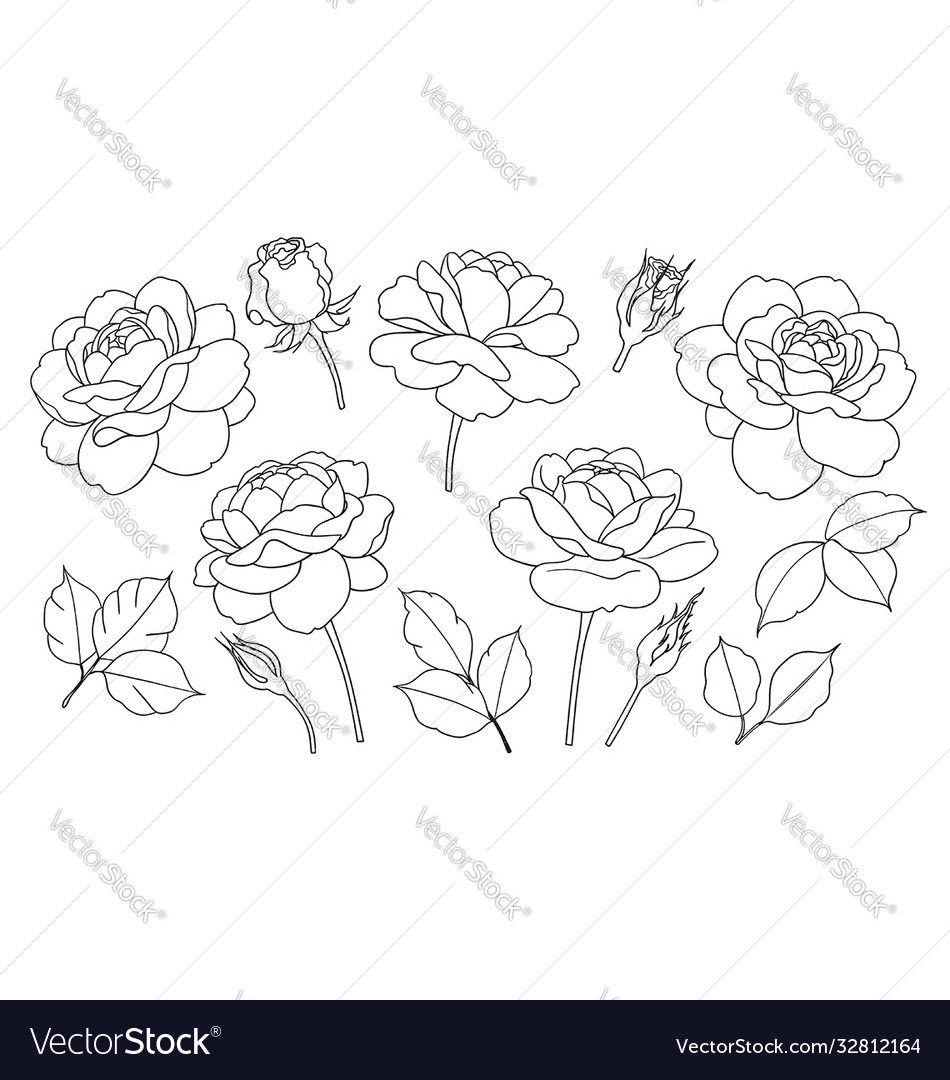 Contoured simple rose flowers buds and leaves set