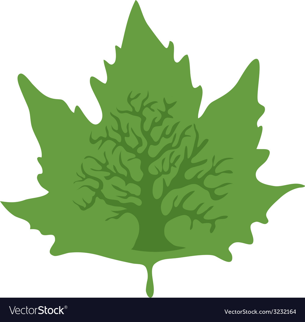 Maple-leaf vector image