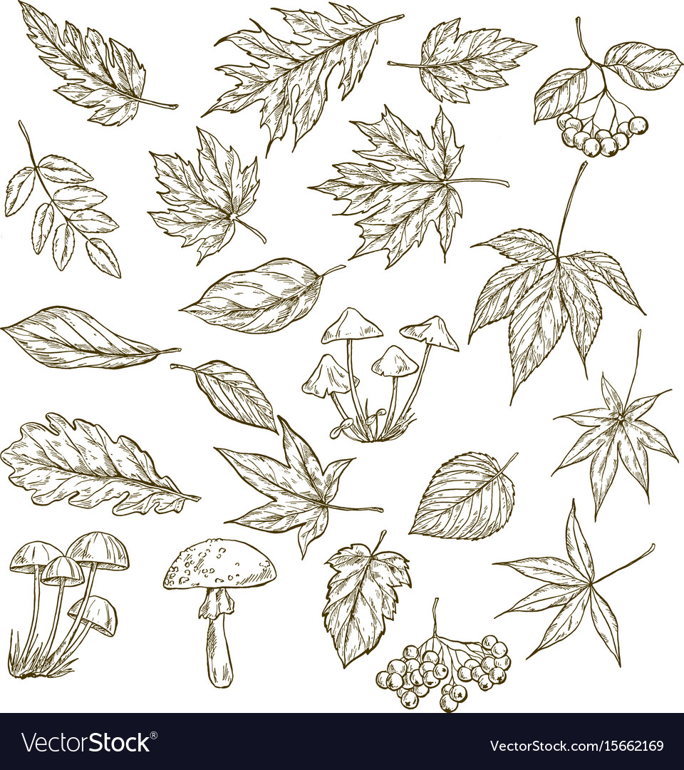 Set of hand drawn leaves berries and mushrooms