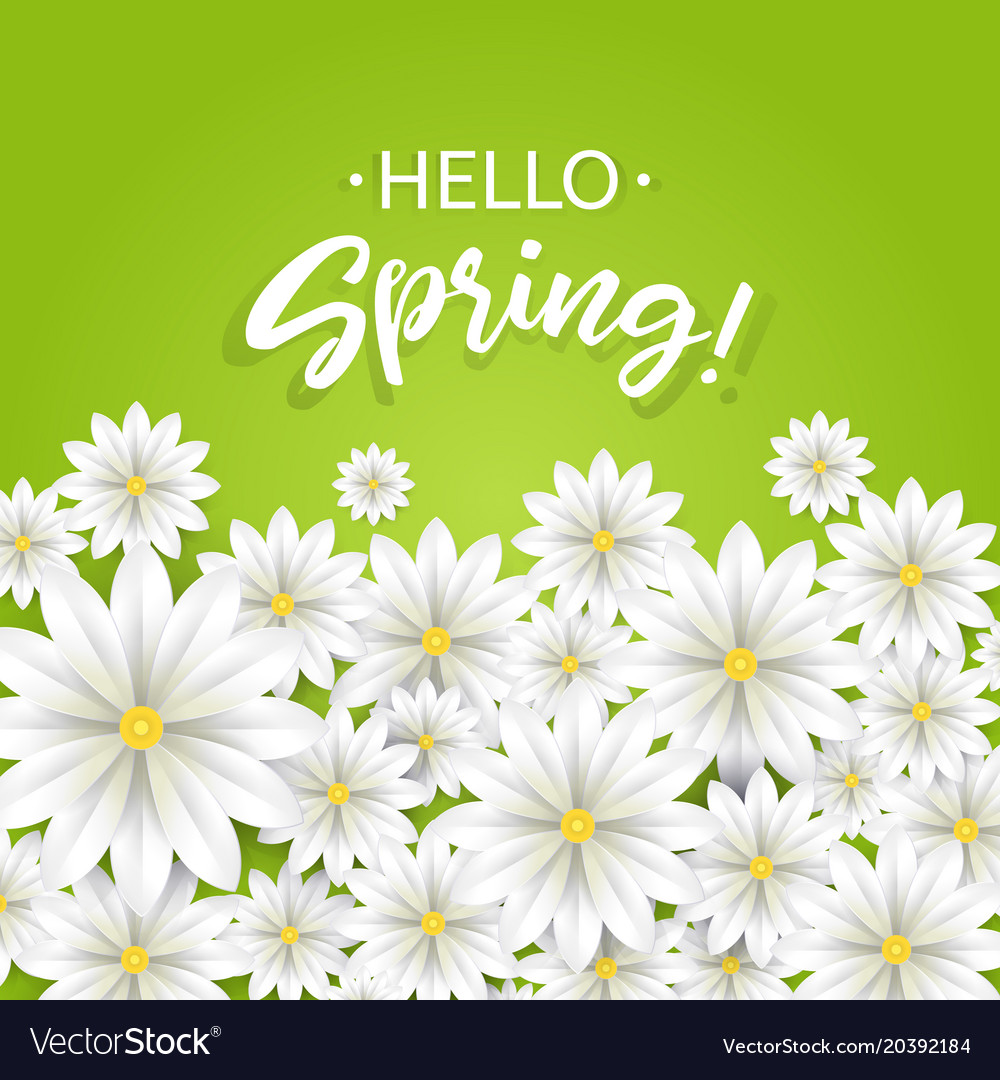 Hello Springhand Lettering With White Flowers Vector Image