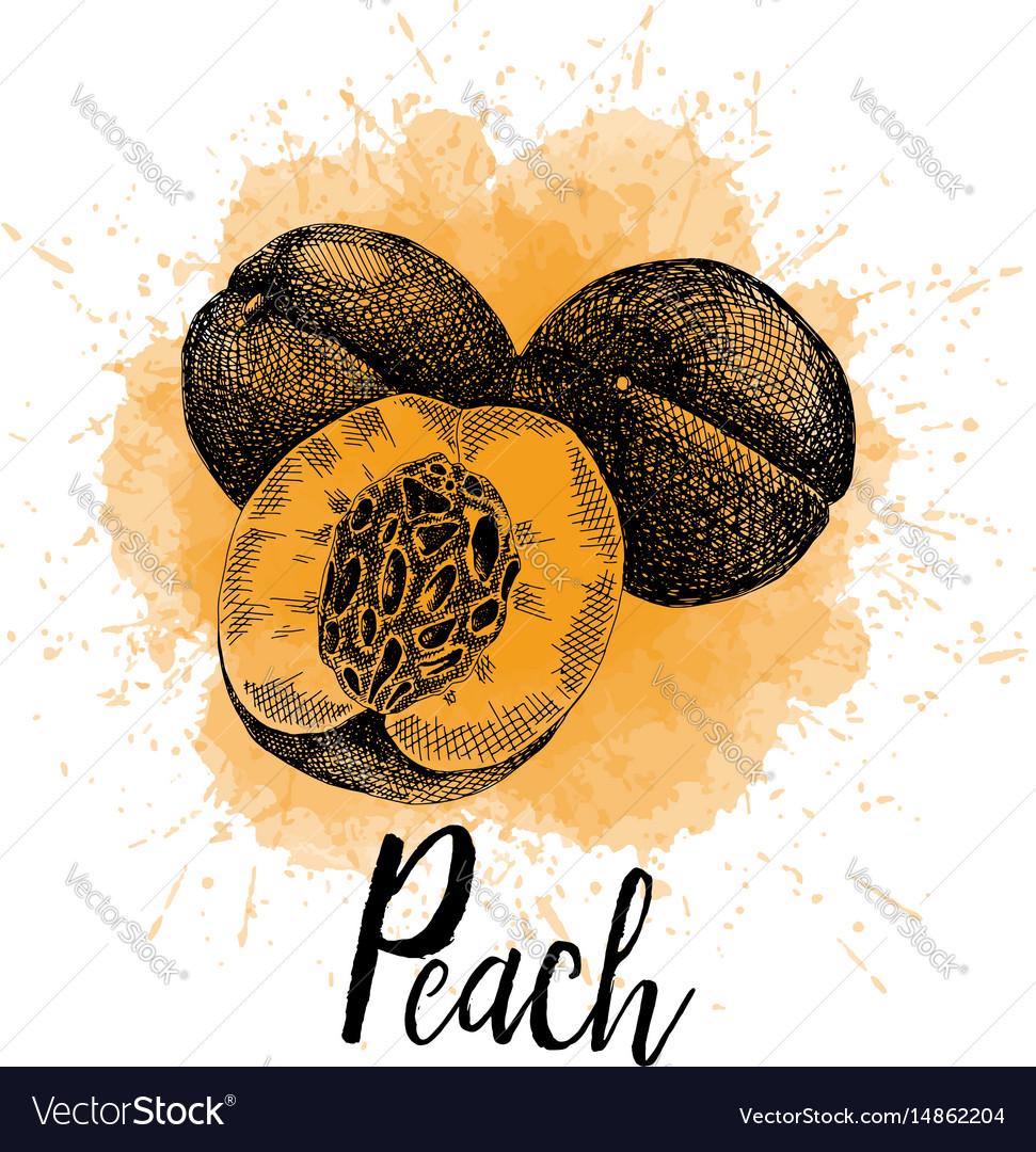 A peach in hand drawn