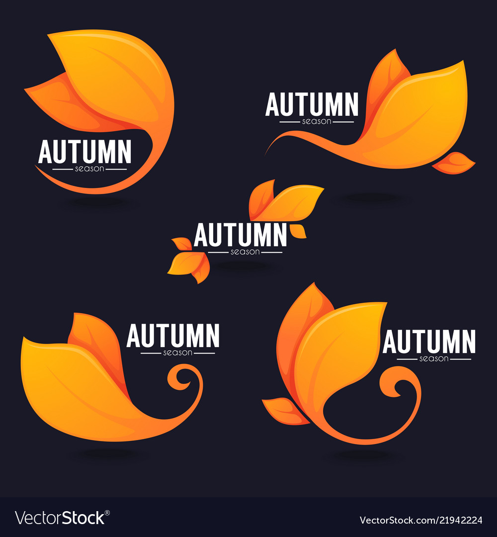 Collection of bright autumn leaves on dark