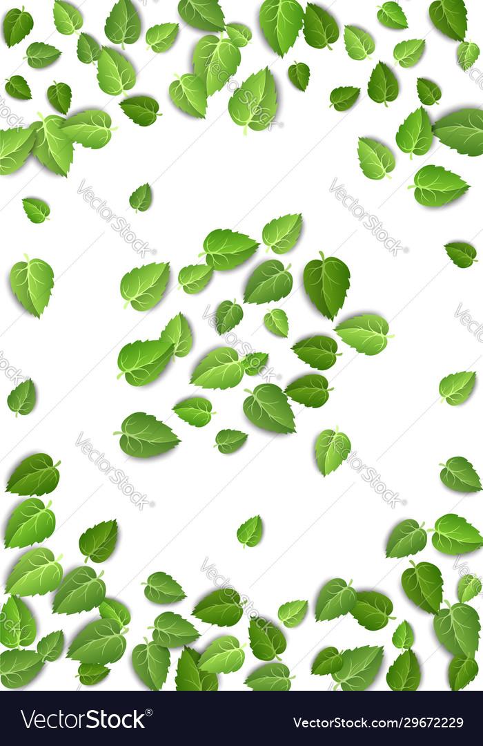 Flying green leaves on white background spring