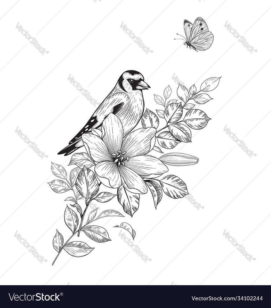 Hand drawn goldfinch sitting on flower vector