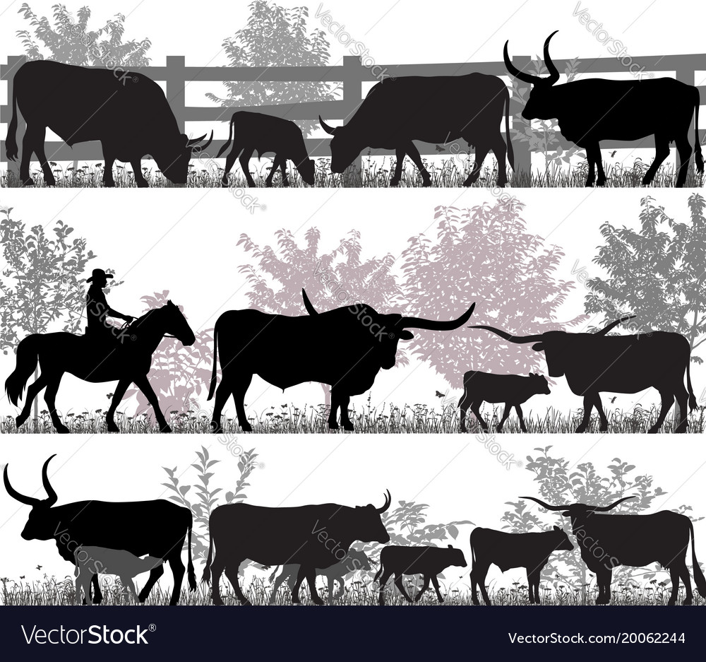 Texas longhorn cattle vector image