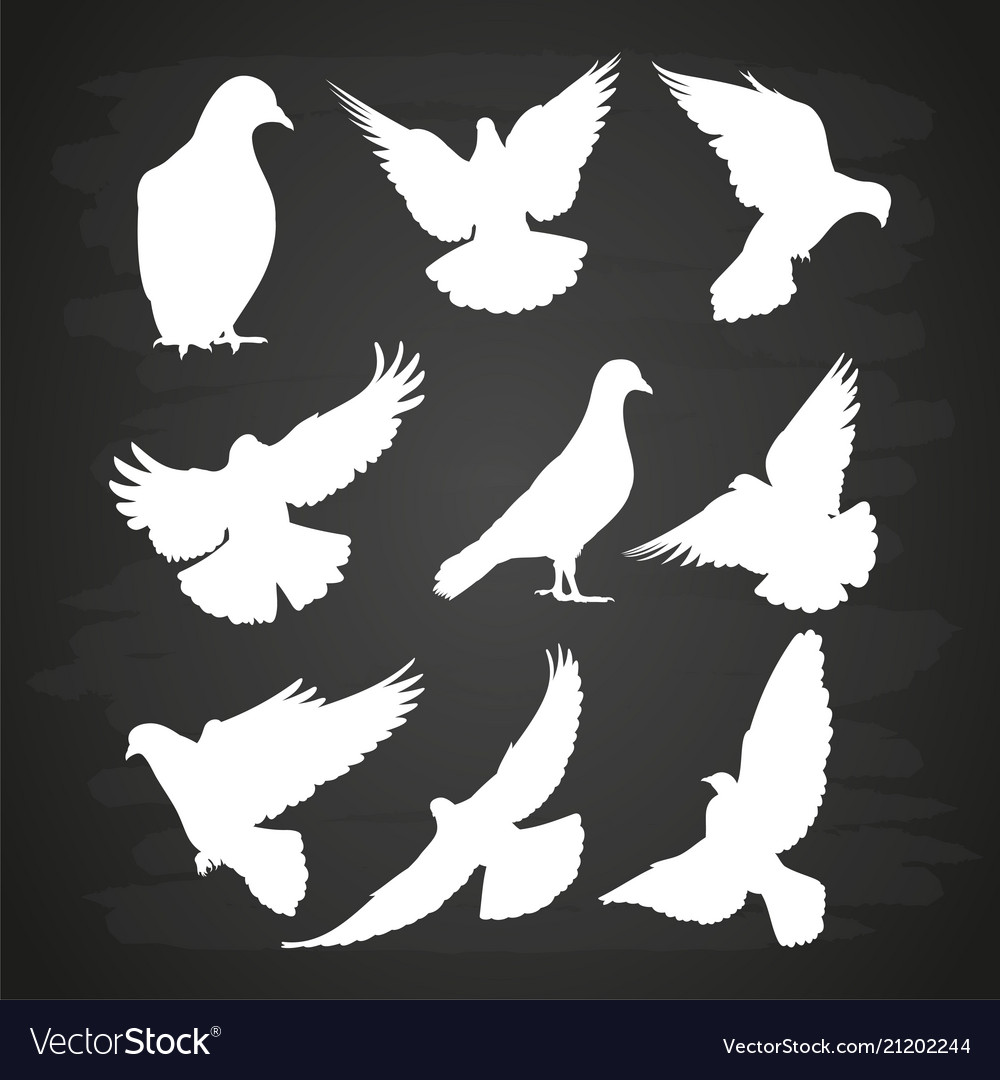 White dove silhouette set on blackboard