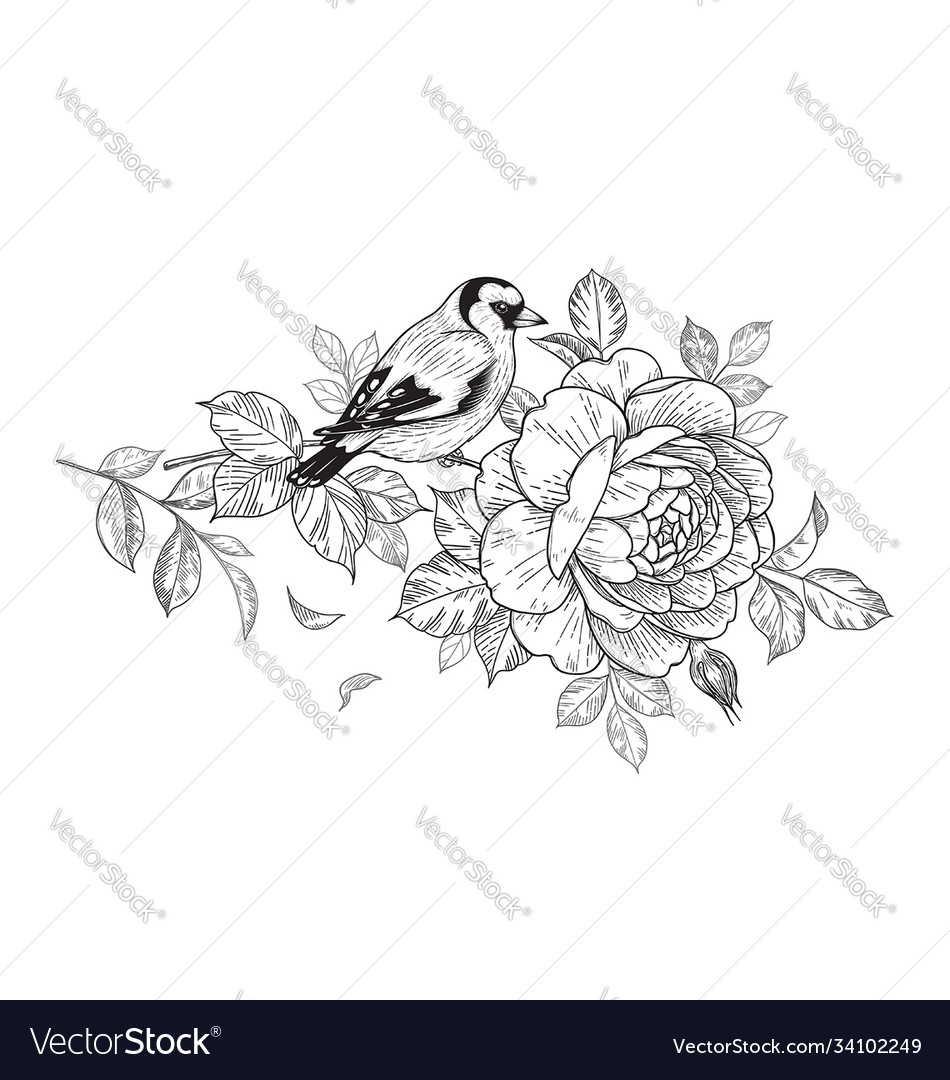 Hand drawn goldfinch sitting on rose branch