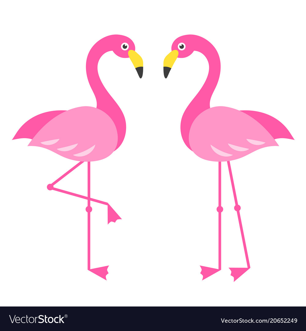 Download Two pink flamingo birds isolated on white Vector Image