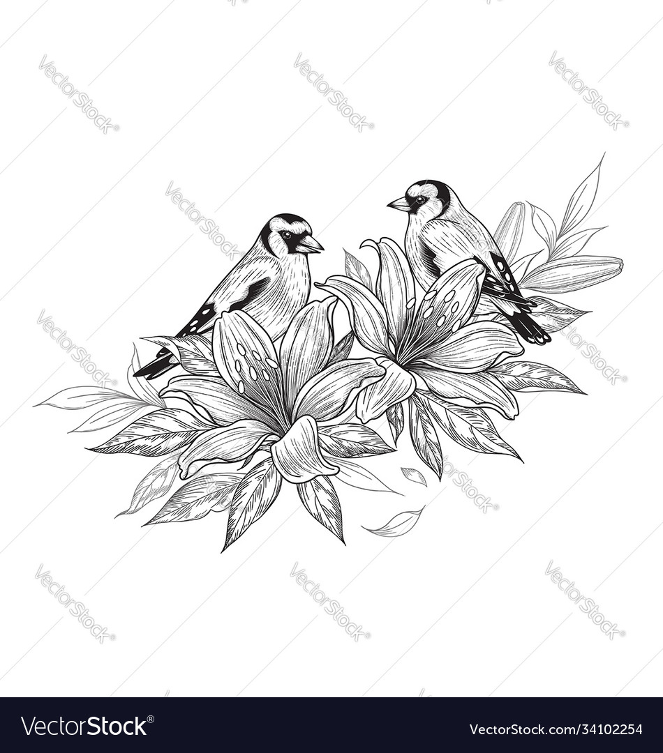 Hand drawn goldfinches sitting on lily flower vector