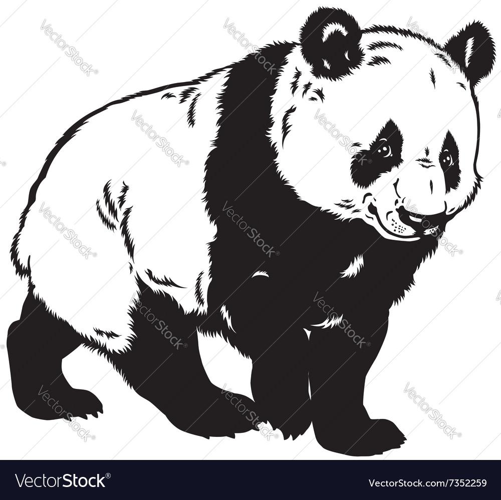 Panda black white vector image