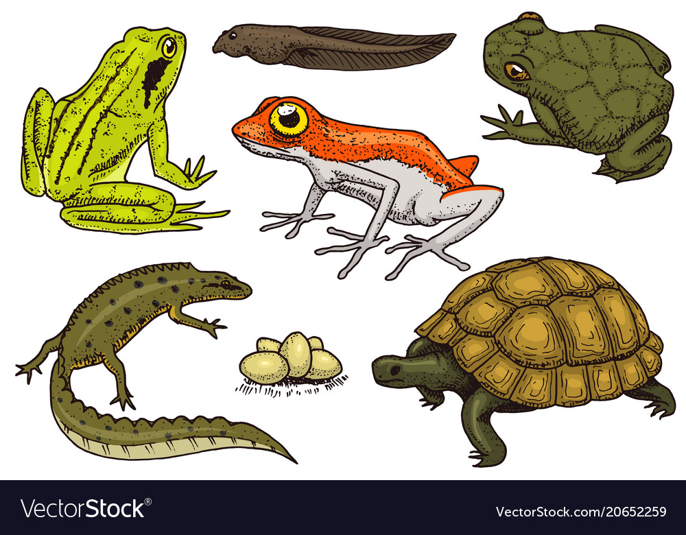 Reptiles and amphibians set pet and tropical