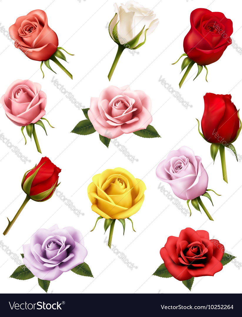 Set different roses