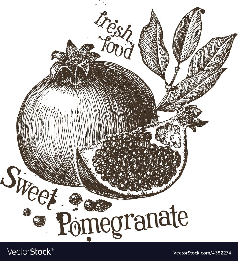 Pomegranate logo design template fruit or