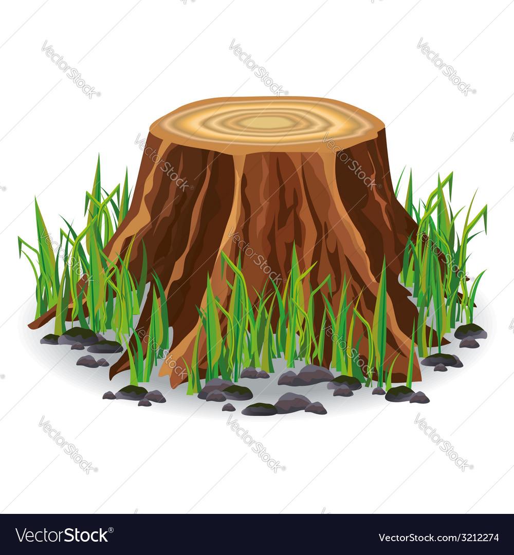 Tree stump with green grass