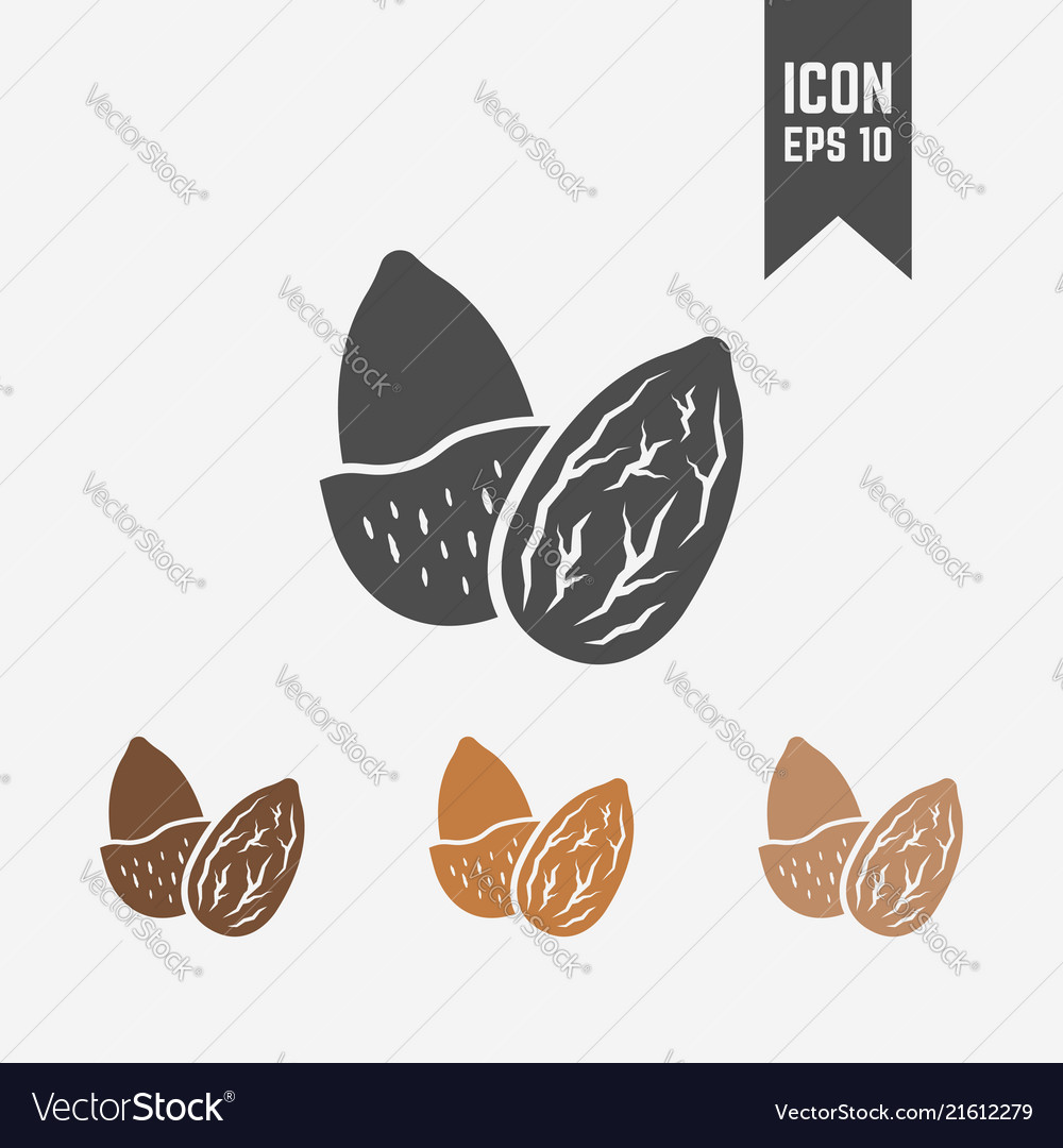 Almond isolated icon