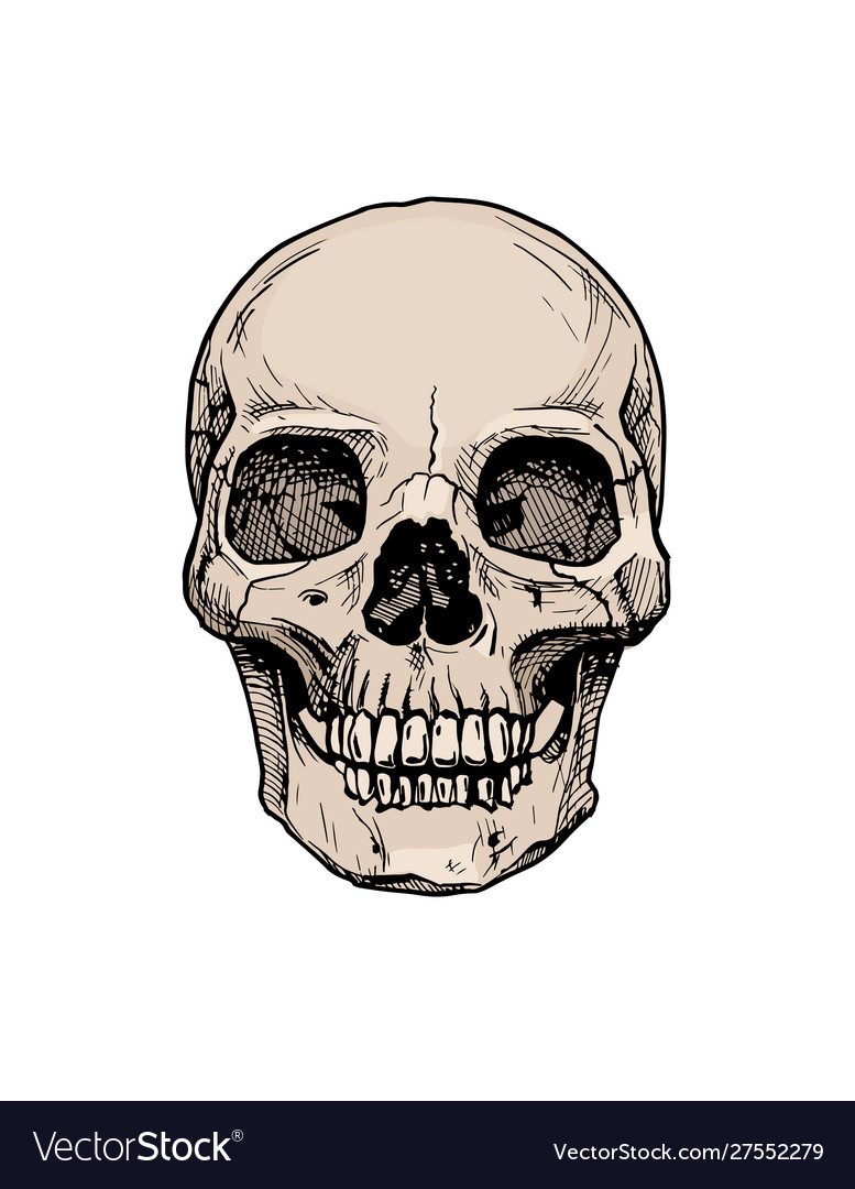 Human skull with a lower jaw