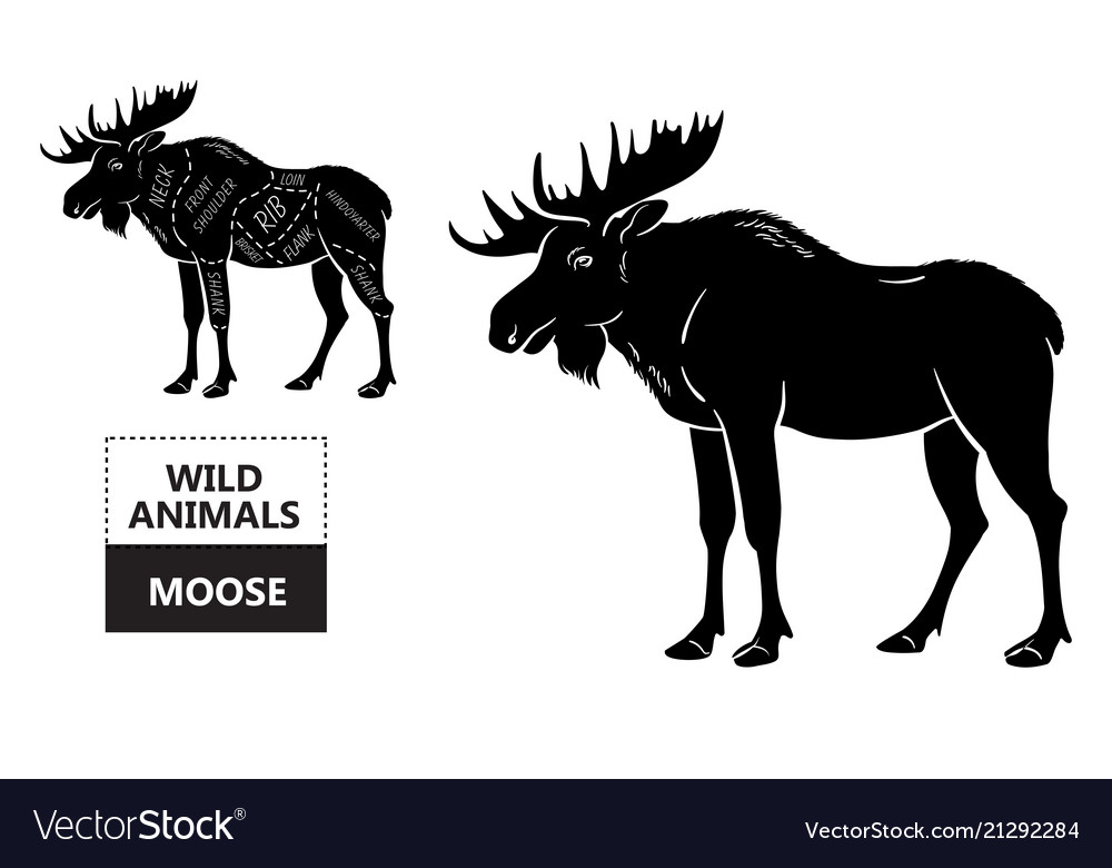 cut of elk set poster butcher diagram desert vector image Diagram Of Moose Cuts locations of cuts on elk moose carcass