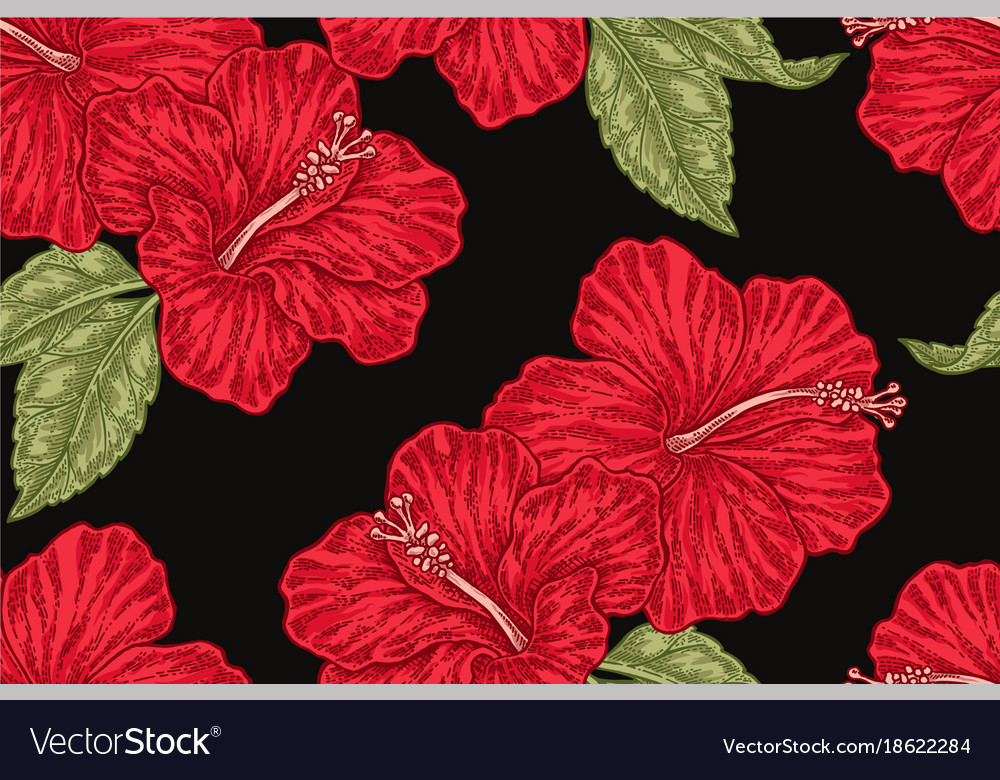 Red Hibiscus Flowers On Black Background Hand Vector Image