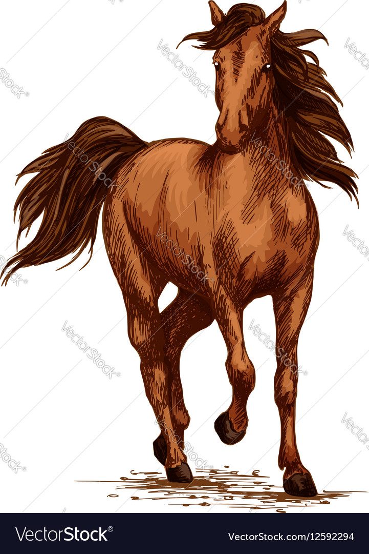 Brown Horse Running Gallop On Races Sketch Vector Image
