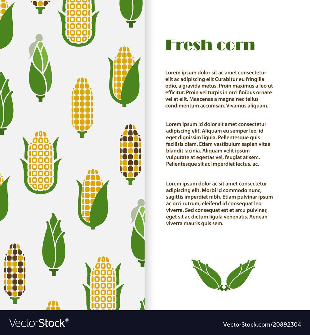 Fresh corn banner template design harvest vector image