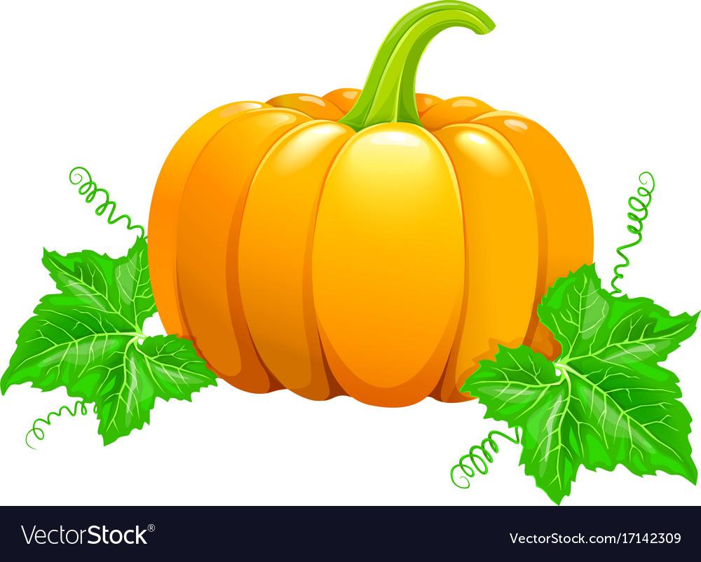 Beautiful ripe orange pumpkin