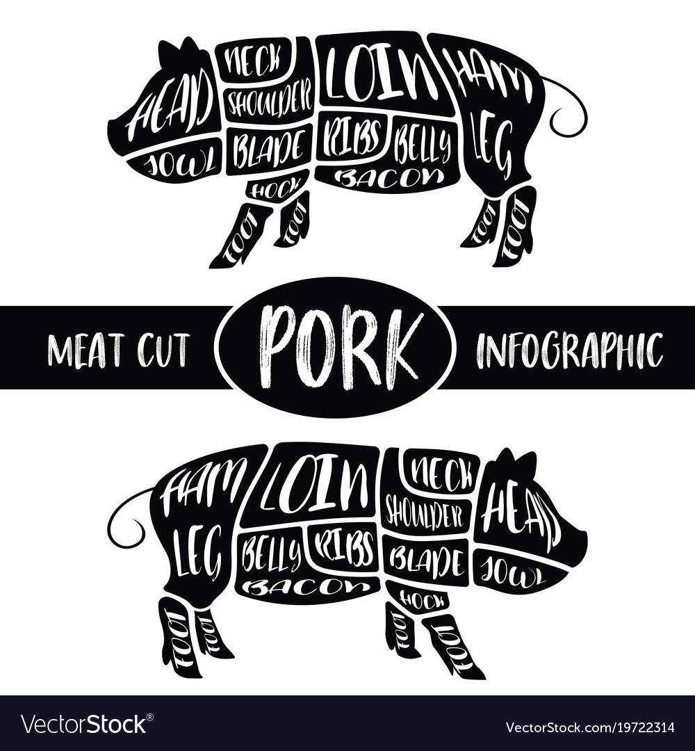 Pig Meat Diagram Graphics All Kind Of Wiring Diagrams Cut Infographic Pork Parts Graphic Vector Image Rh Vectorstock Com Butcher Print