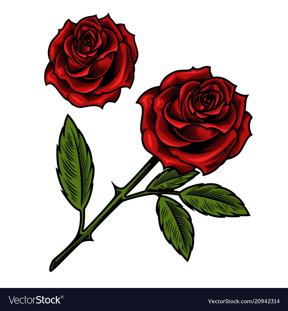 Single Beautiful Red Rose Royalty Free Vector Image