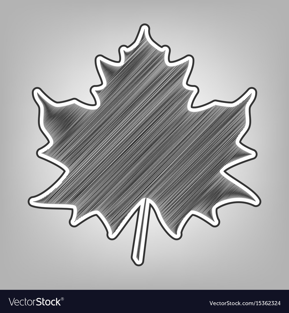 Maple leaf sign pencil sketch imitation vector image