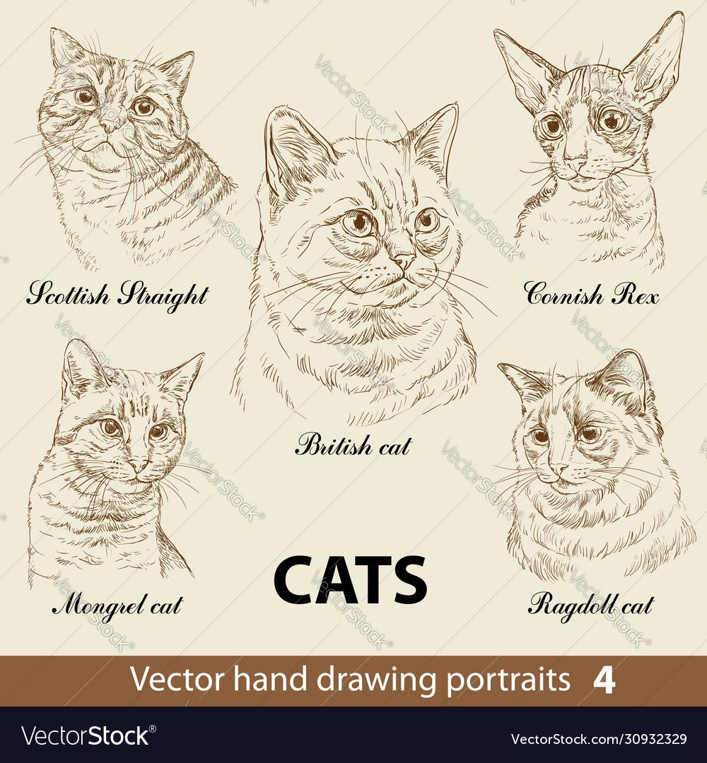 Set hand drawing cats 4