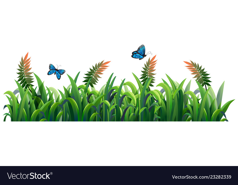 Flower and grass for decor