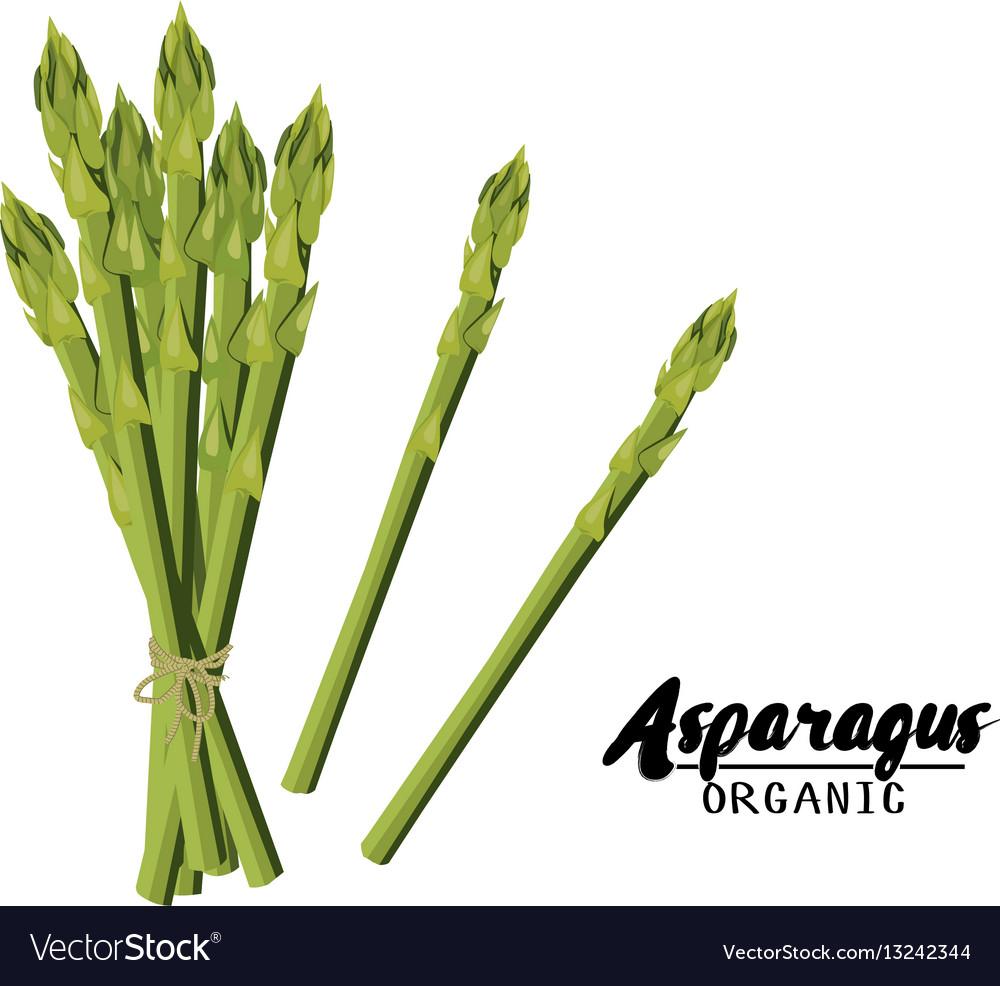 Cartoon asparagus ripe green vegetable