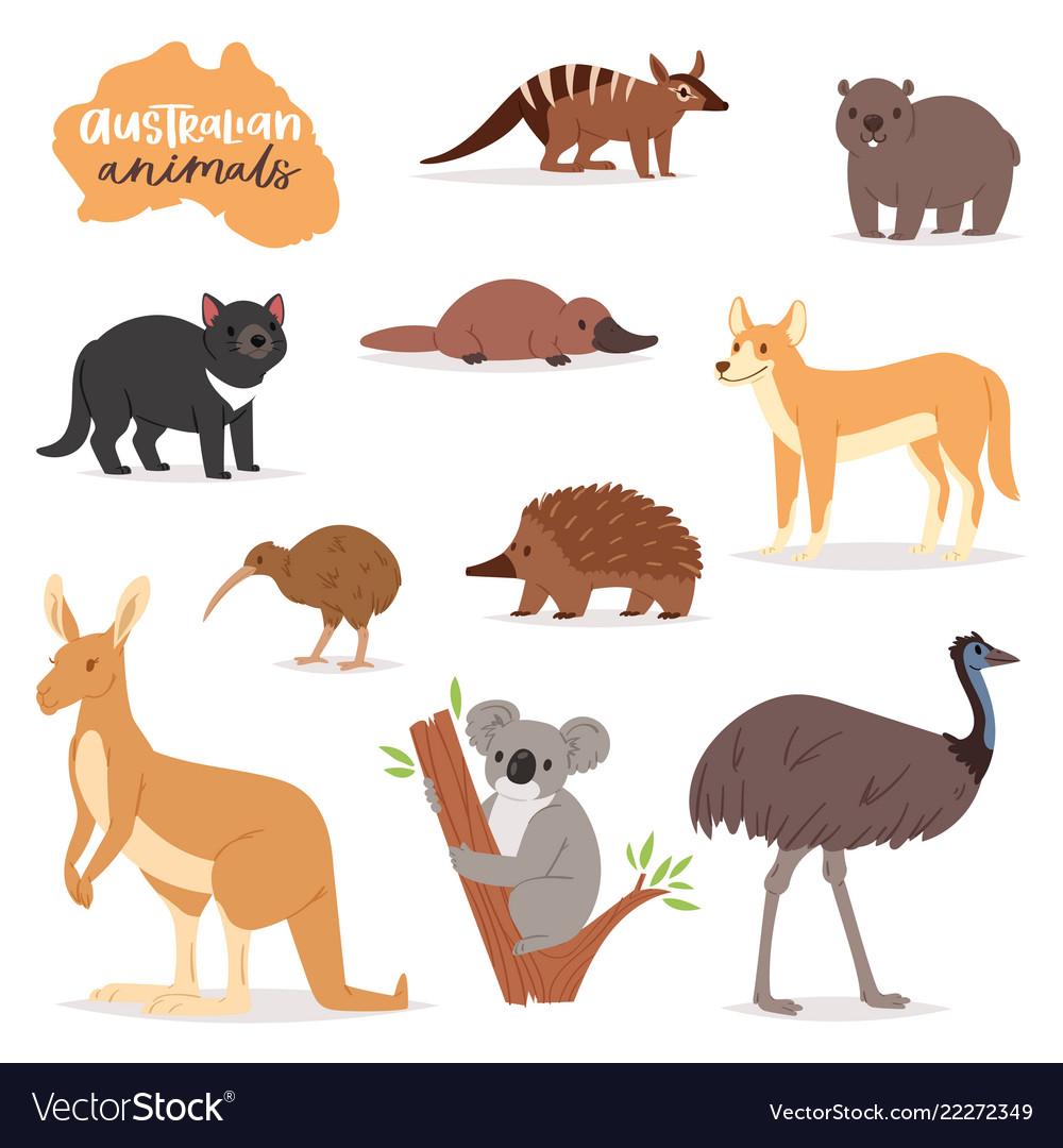 Australian animals animalistic character in