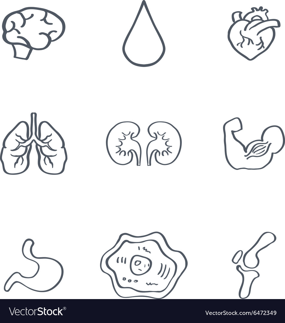 Human Organs Medical Icons vector image