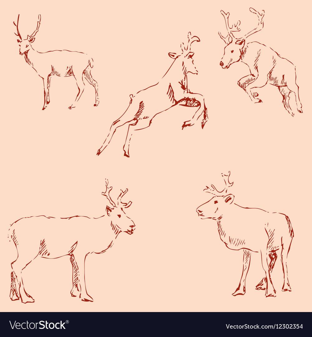 Deer sketch Pencil drawing by hand Vintage