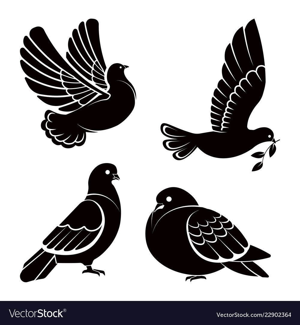 Pigeon or dove white bird flying with spread
