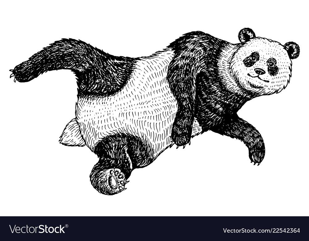 Soaring giant panda a wild cute animal falls down