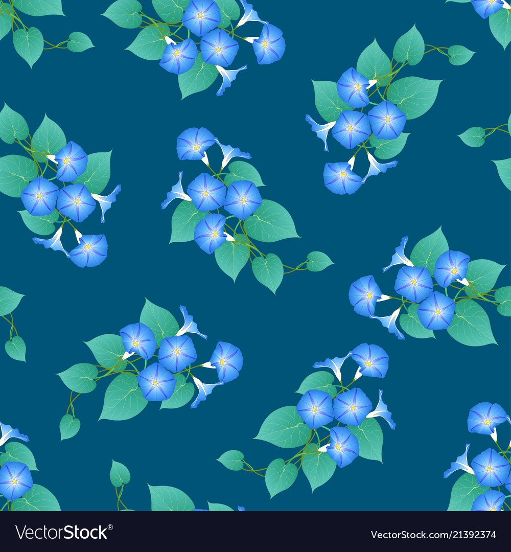 Blue morning glory on green teal background