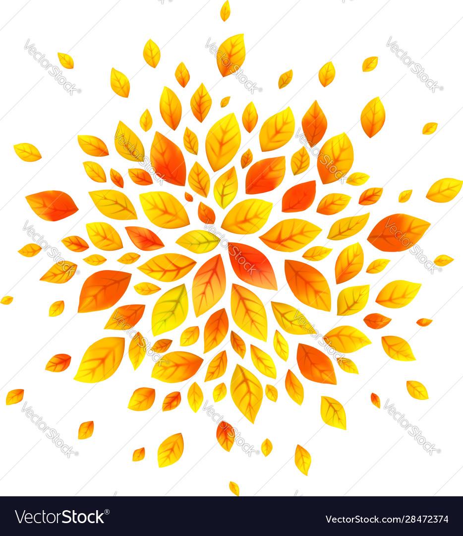 Orange autumn leaves round splash isolated