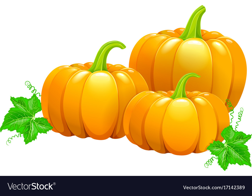 Three beautiful ripe pumpkins