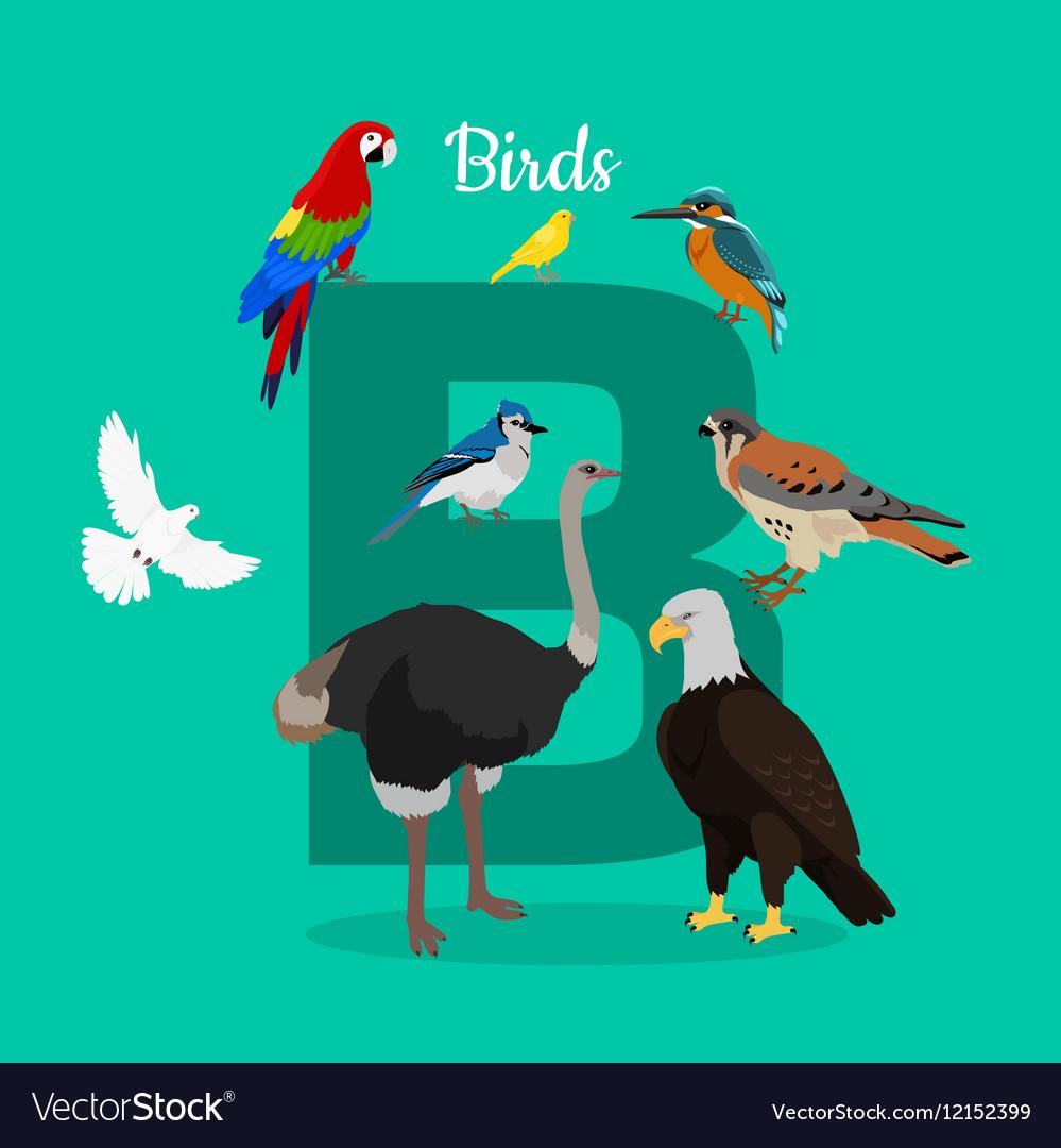 Birds with Letter B Isolated ABC Alphabet