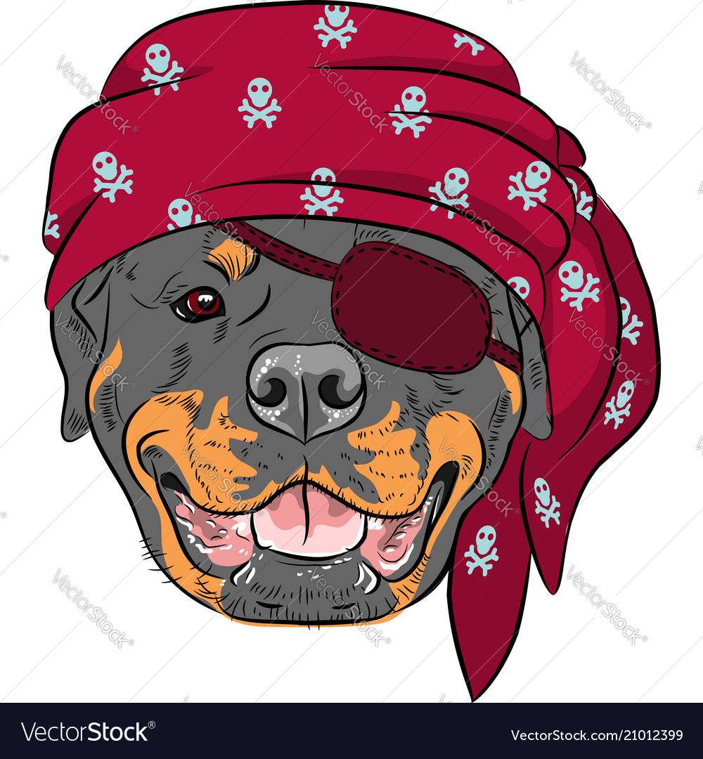 Dog rottweiler pirate