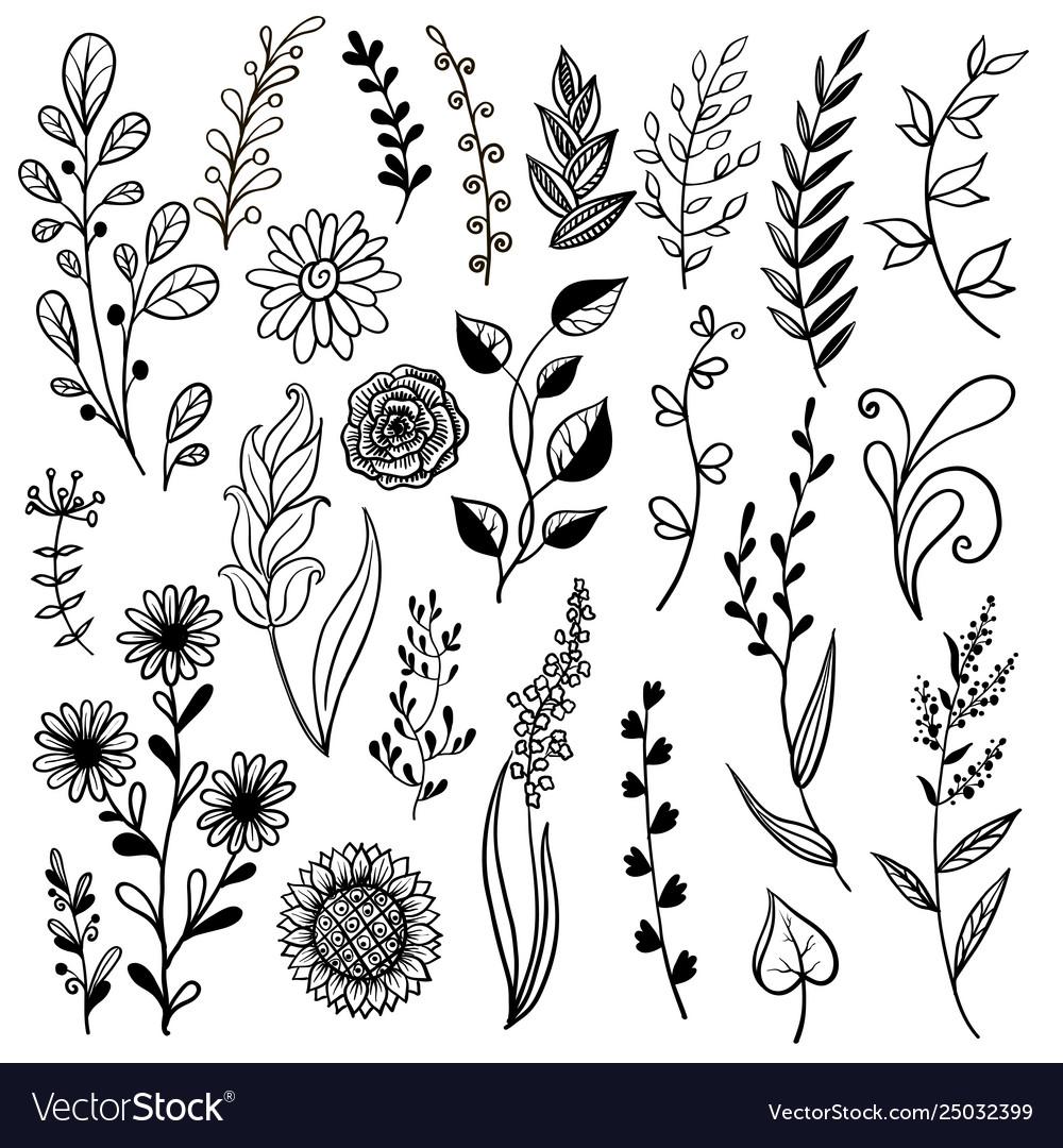 Hand drawn plant herb flowers