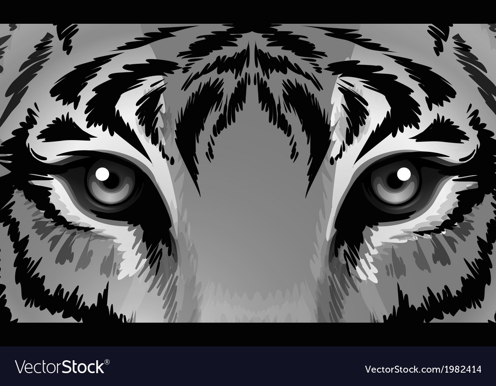A tiger with sharp eyes